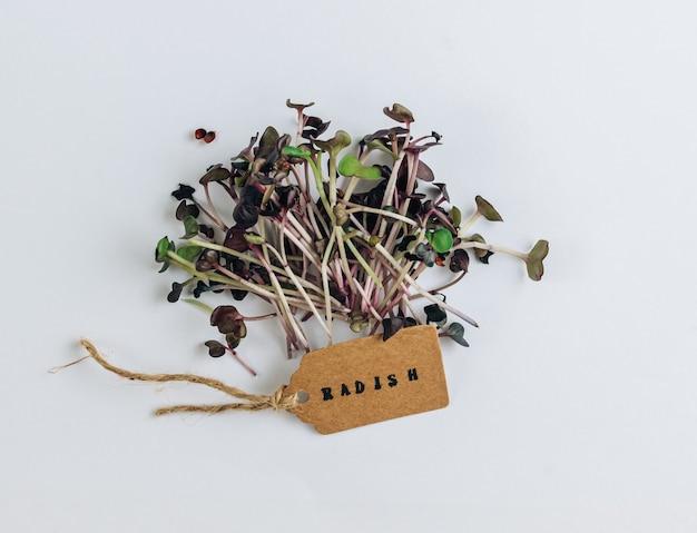 Rzodkiewka microgreens na białym tle. koncepcja zdrowej żywności. widok z góry. płaskie ułożenie