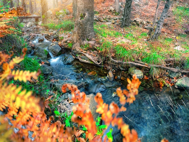 Rzuć się na górskiej rzece w lesie jesienią