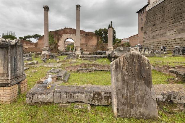 Rzym, włochy - 11.19.2019: widok forum rzymskiego. rzym jesienią.