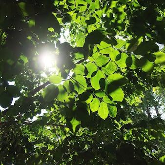 Słońce zerkające przez drzewa liści