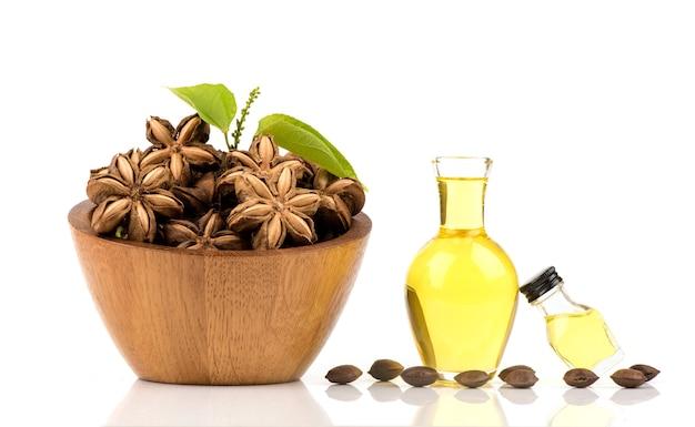 Sacha inchi lub plukenetia volubilis, suszone owoce i olej na białym tle.