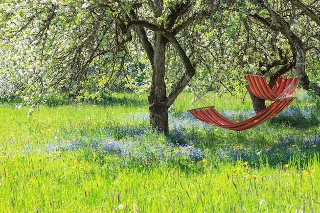Sad jabłkowy na wiosnę i dwa hamaki w cieniu ogrodu