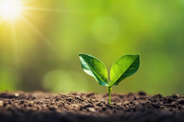 Sadzenie drzewa w ogrodzie ze wschodem słońca. koncepcja oszczędzania świata