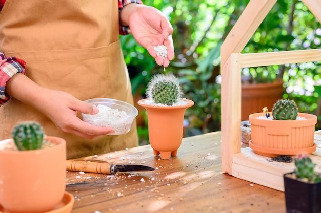 Sadzenie kaktusów i rosnące drzewo. domowe ogrodnictwo i działalność rekreacyjna w ogrodzie botanicznym.