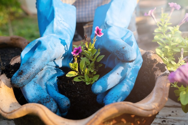 Sadzenie kwiatu. dwie strony kwiat roślin.