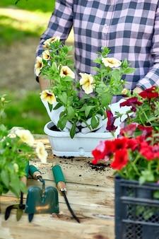 Sadzenie ogrodnika z narzędziami do doniczek.