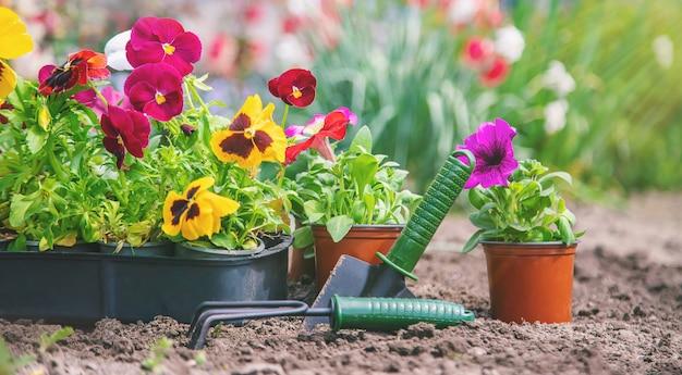Sadzenie ogrodu kwiatowego, wiosna lato. selektywne ustawianie ostrości.