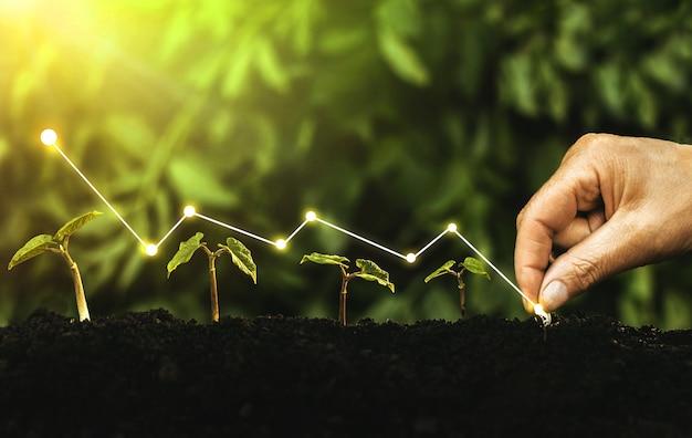 Sadzenie ręczne sadzonki rosnący krok w ogrodzie ze słońcem. pojęcie wzrostu gospodarczego, zysku, rozwoju i sukcesu.