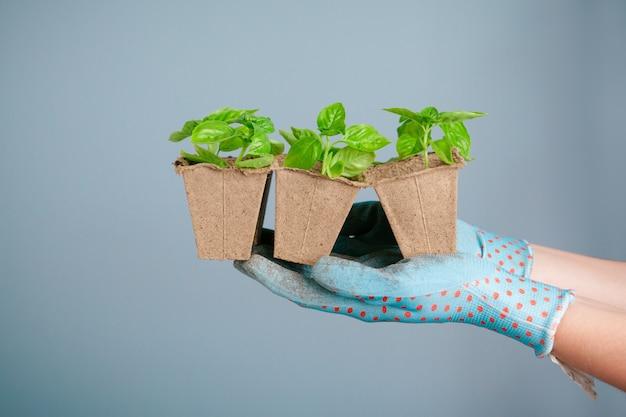Sadzenie sadzonek w szklarni w wiosny zakończeniu up