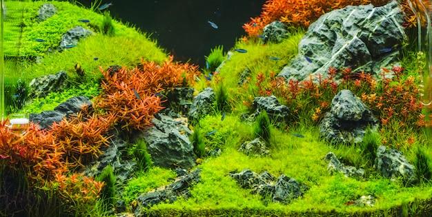 Sadzone akwarium z kardynałem ryb tropikalnych