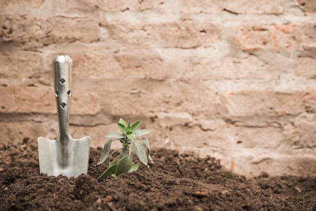 Sadzonka i ręczna łopata w glebę