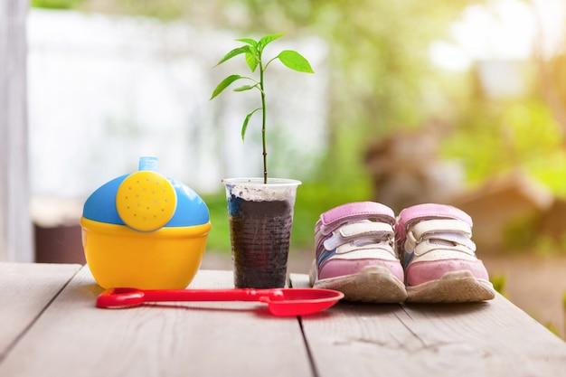 Sadzonka na drewnianych deskach z rzeczami dziecięcymi. koncepcja ogrodnictwa dla dzieci.