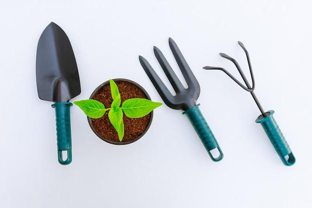 Sadzonka papryki w plastikowym garnku i narzędzi ogrodniczych na białym tle