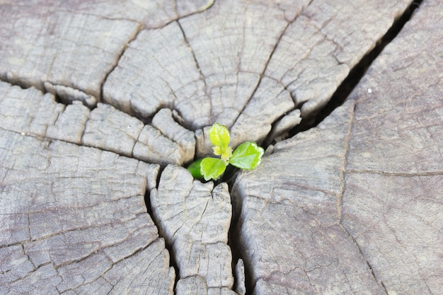 Sadzonka rosnąca w środkowym pniu jako koncepcja nowego życia