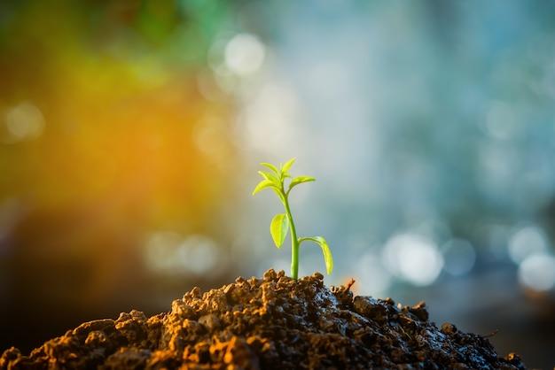 Sadzonka rośnie w glebie za pomocą światła słonecznego.