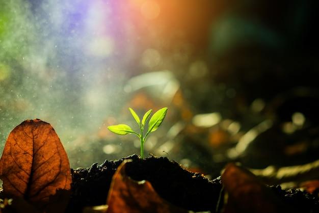 Sadzonka rośnie w glebie ze światłem słonecznym.