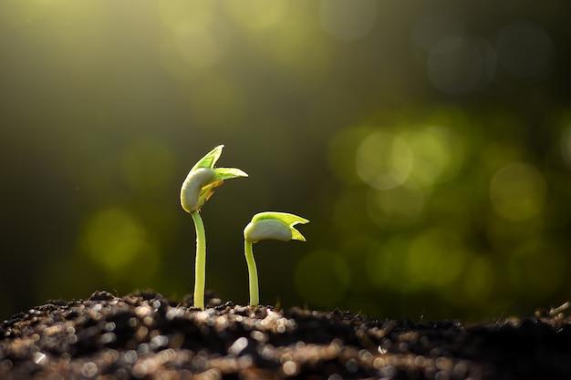 Sadzonka rośnie w glebie.