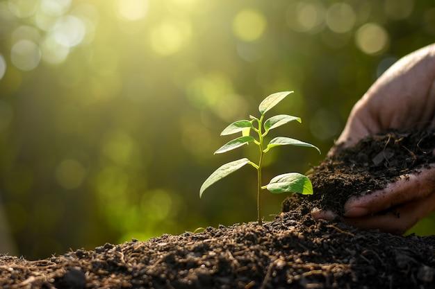 Sadzonka rośnie z bogatej gleby.