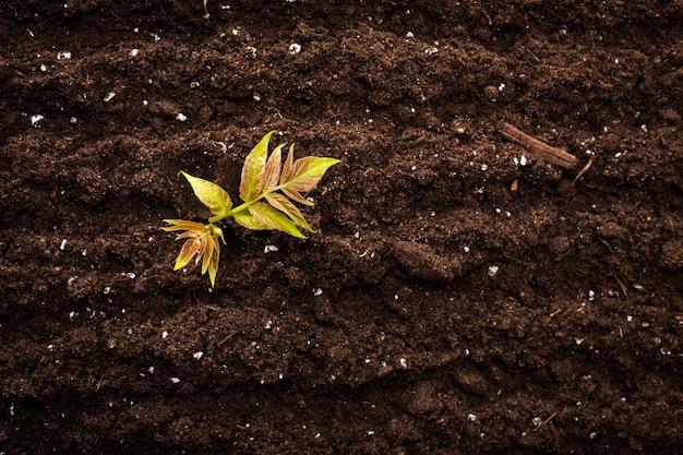 Sadzonka zielona roślina w ziemi