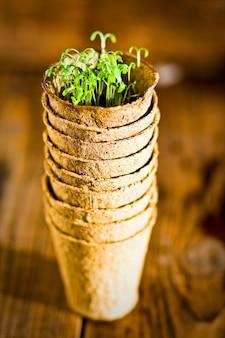 Sadzonki doniczkowe rosnące w biodegradowalnym mchu torfowym