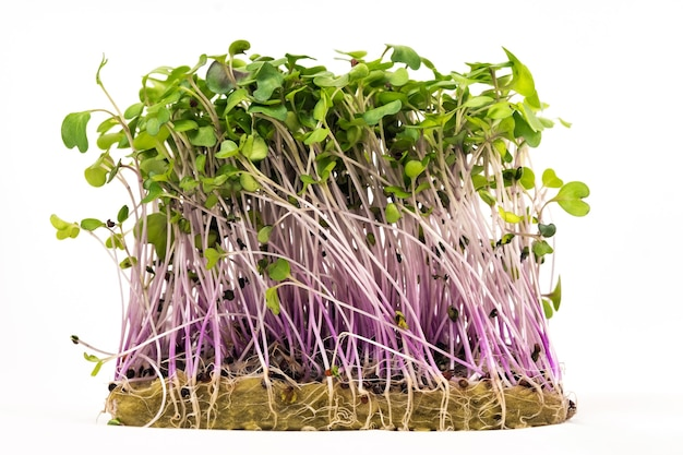 Sadzonki mikro-zielonych nasion na białym tle odizolowane.
