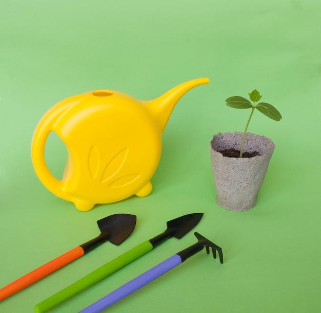 Sadzonki ogórka z narzędziami ogrodowymi