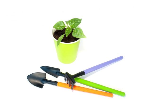 Sadzonki pieprzu z narzędziami ogrodowymi