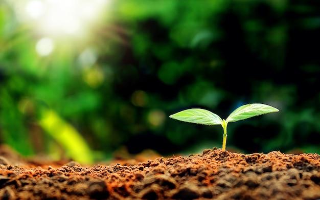 Sadzonki rano na zielonym tle