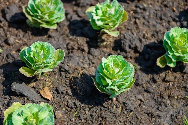 Sadzonki, rośliny ozdobne