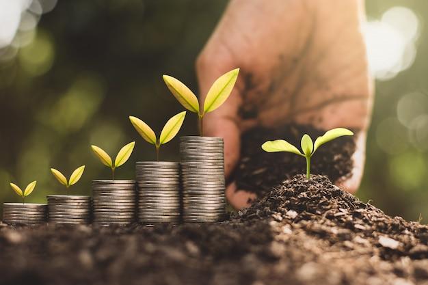 Sadzonki rosną na monetach, myśląc o wzroście finansowym.