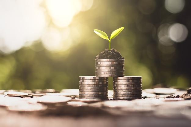 Sadzonki rosną na monetach, myśląc o wzroście finansowym