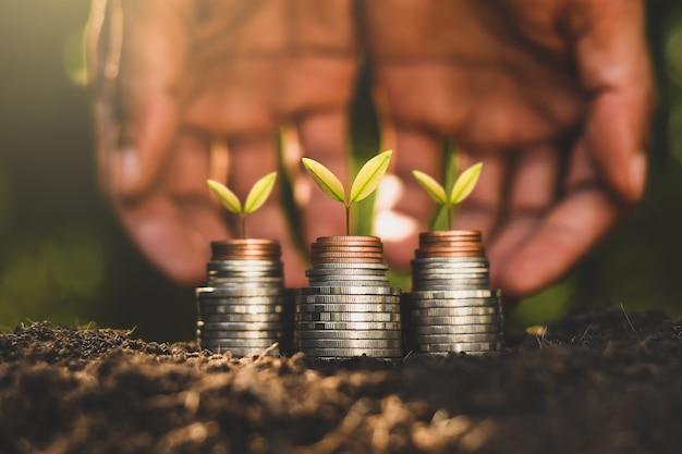 Sadzonki rosną na monetach.