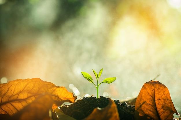 Sadzonki rosną w glebie z kroplami wody i światłem słonecznym rano.