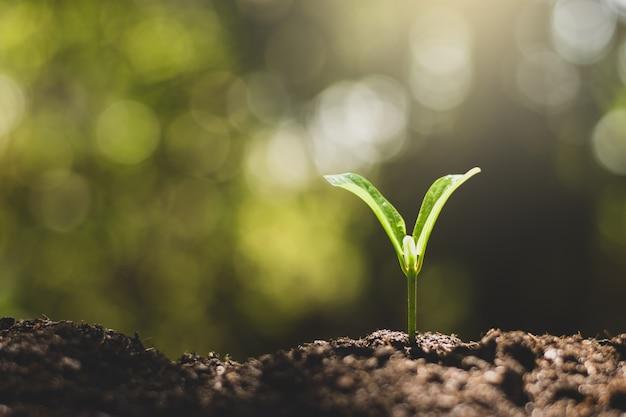 Sadzonki rosną z bogatej gleby.