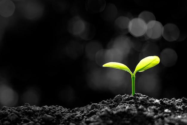 Sadzonki rosną z gleby.