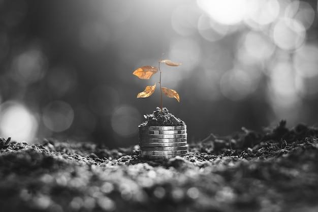 Sadzonki usychały na monetach ułożonych na ziemi.