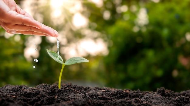 Sadzonki wyrastają z żyznej gleby, a poranne słońce świeci. koncepcja ekologii i równowagi ekologicznej.
