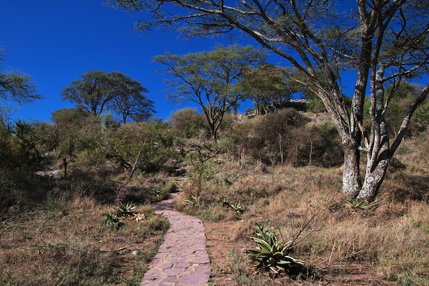 Safari w kenii i tanzanii w afryce