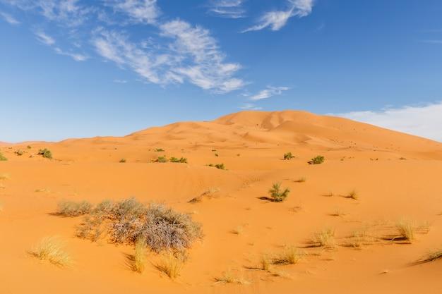 Sahara, marokański pustynia krajobraz z niebieskim niebem