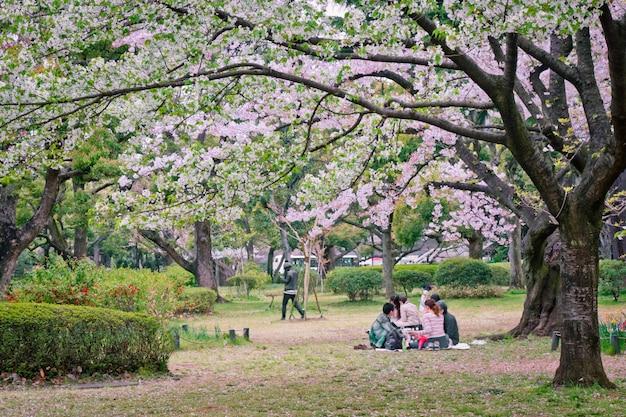Sakura drzewo w parku