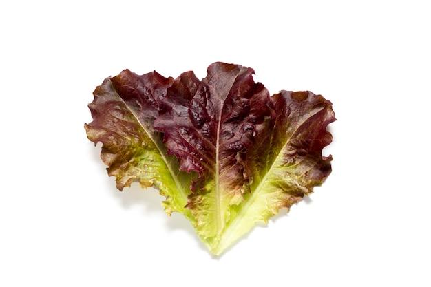 Sałata z czerwonych liści jest świeża organiczna odizolowana na białej powierzchni z cieniami