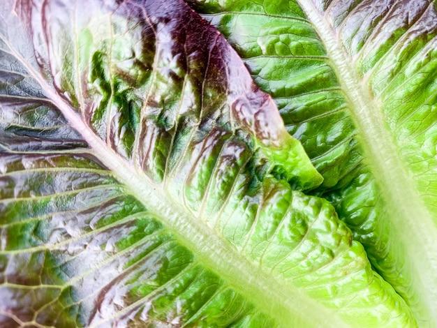 Sałata zielona świeża sałata pozostawia makro tekstury, zdjęcie w wysokiej rozdzielczości. streszczenie tło warzywo.