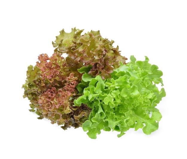 Sałata zielony dąb z kropli wody na białym tle.
