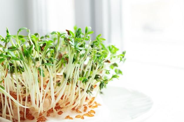 Sałatka z rukwi wodnej na parapecie. rosnące mikrogreeny. koncepcja zdrowego odżywiania