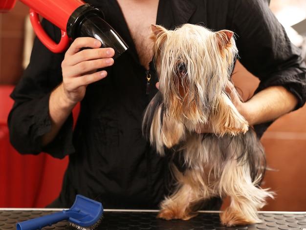 Salon fryzjerski psów z psem yorkshire w salonie