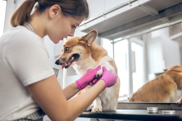 Salon fryzjerski. strzyżarka dla zwierząt pracuje w asalon i wygląda na zaangażowaną