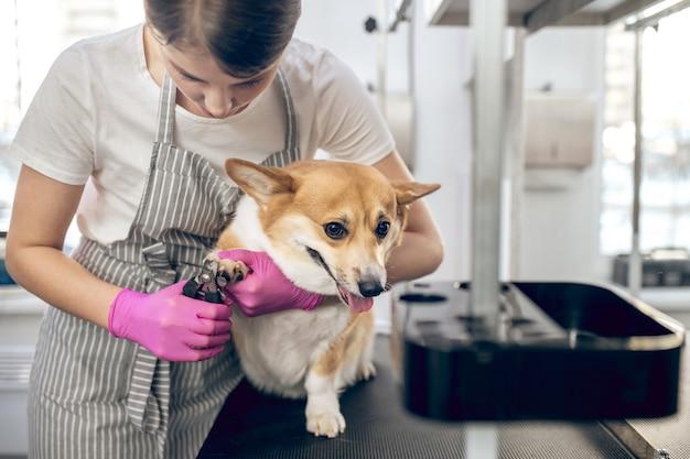 Salon pielęgnacji zwierząt. kobieta obrządził pazury do ślicznego psa