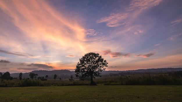 Sam drzewo na łące o zachodzie słońca