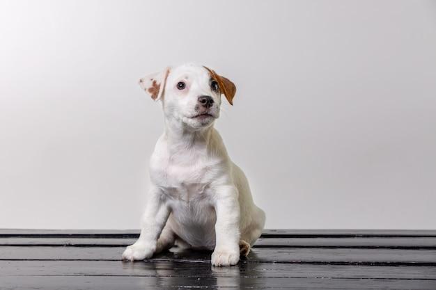 Sam słodki mops pies smutny i usiąść na krześle plażowym. skopiuj spase