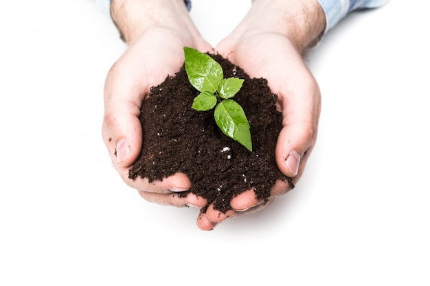 Samiec wręcza trzymać ziemię i rośliny, zbliżenie